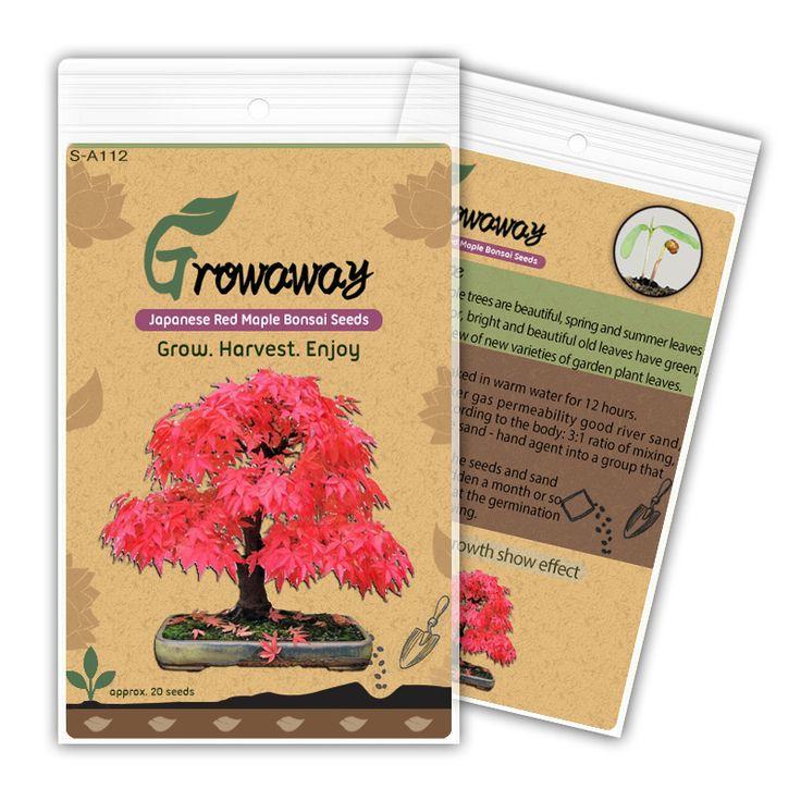 20 Mini Beautiful Japanese Red Maple Bonsai Seeds, DIY Bonsai , FRESH MAPLE SEEDS , new packing