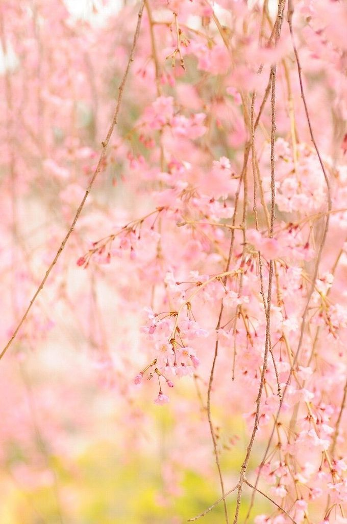 Beautiful soft and delicate