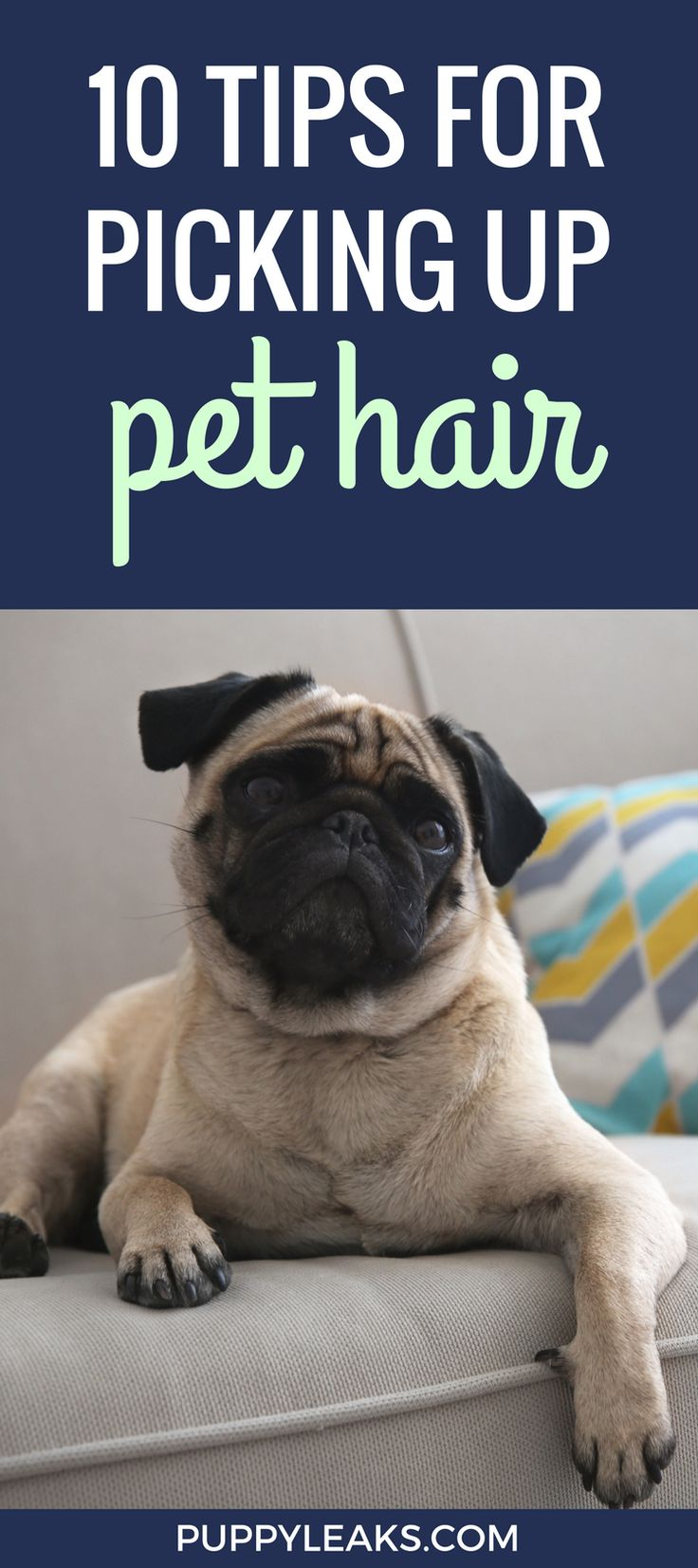 best 25 cleaning dog hair ideas on pinterest car cleaning tips