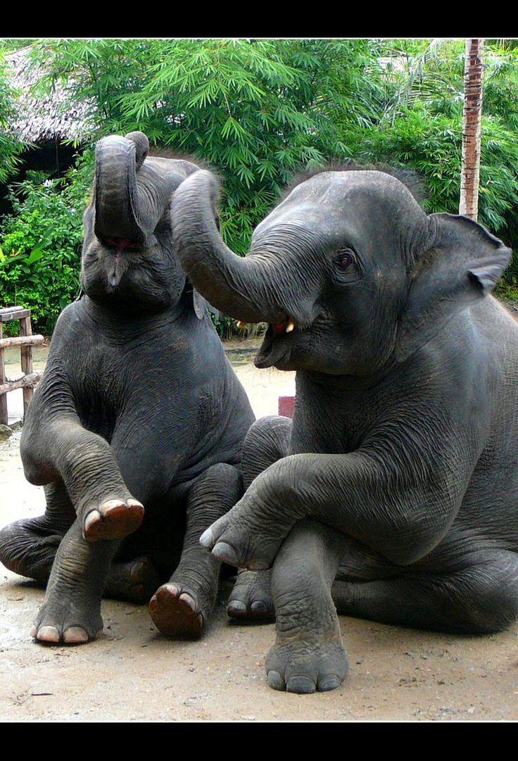 Elephantsby ~NoisyPinkBubbles