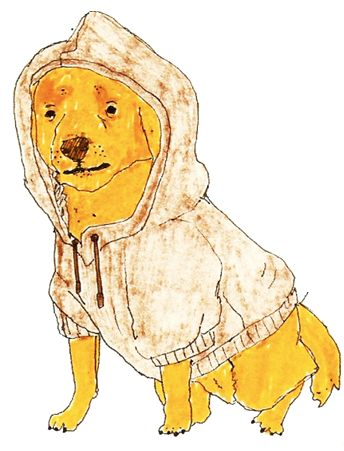 dog with hoodie