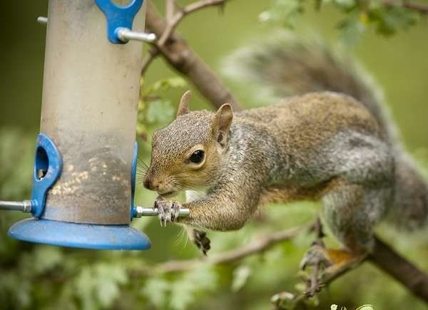 How To Get Rid Of Critters In The Garden