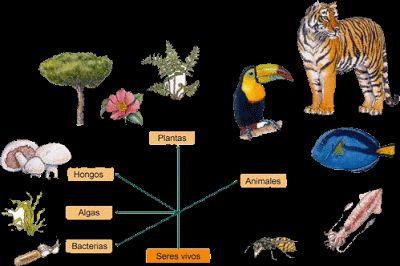Historia de la clasificación de los seres vivos http://cienciasnaturales.carpetapedagogica.com/2012/08/historia-de-la-clasificacion-de-los.html