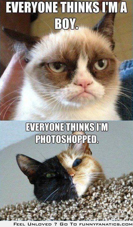 Cat problems - Grumpy Cat and Venus the kitty! (my favorite meme so far!)
