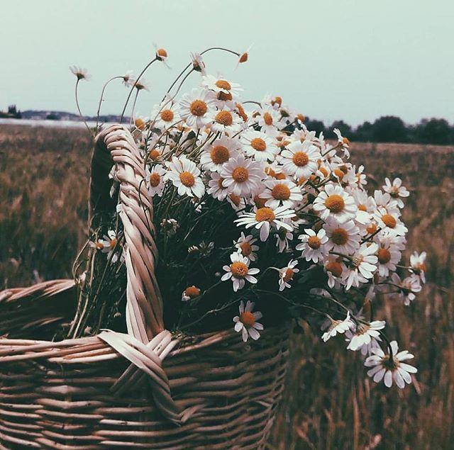 🏆Günün Fotoğrafı / Photo of the day: @nuranakar_ 🌄✨Günaydın / Good Morning ✨🌄 ➖➖➖➖➖➖➖➖➖➖➖ 💯🏆Tebrikler / Congratulations🏆💯 ➖➖➖➖➖➖➖➖➖➖➖ 🏆Seçim / Selected By: @elif_carpan ➖➖➖➖➖➖➖➖➖➖➖ 📍Follow⠀👉🏼 @ig_photo_gram 📍 Add Taq 👉🏼 #ig_photo_gram ➖➖➖➖➖➖➖➖➖➖➖