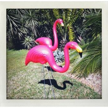 Pair of Pink Flamingoes