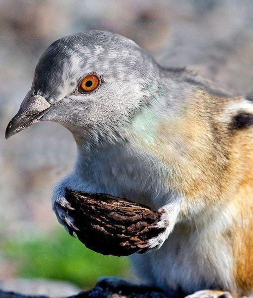 135 Best Cool Animal Hybrids Images On Pinterest Strange
