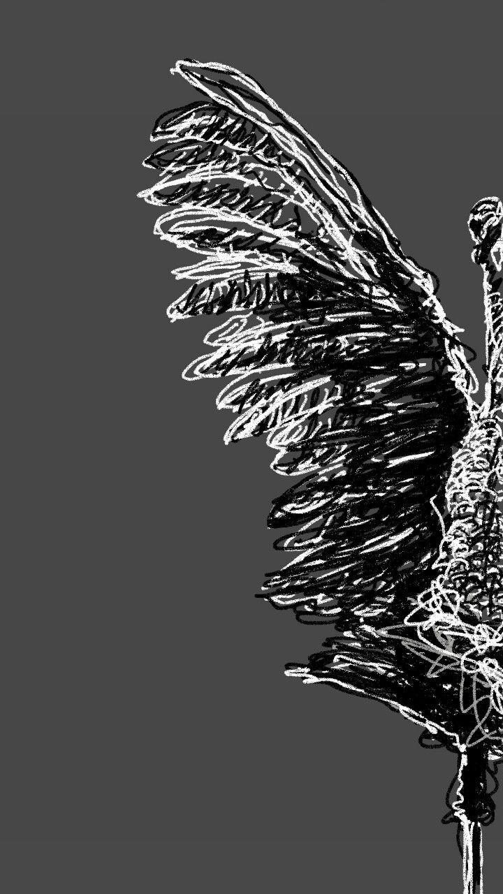 Once devastated, wild turkey populations make big comeback.