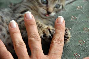 Cat-scratch disease