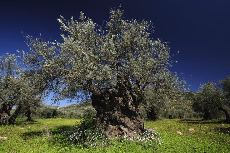 piante autoctone della sicilia