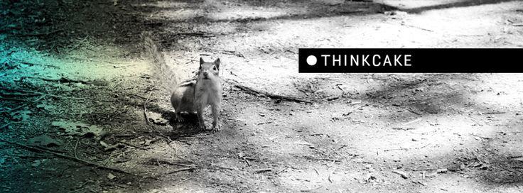 cakecommunication.com, design, #thinkcake, graphic design, facebook, photo, squirrel