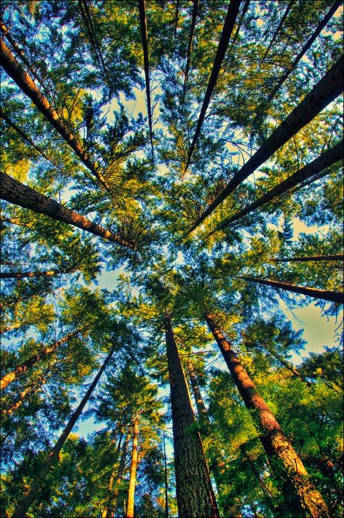 Lying Down On The Ground Looking Up At The Sky And Trees