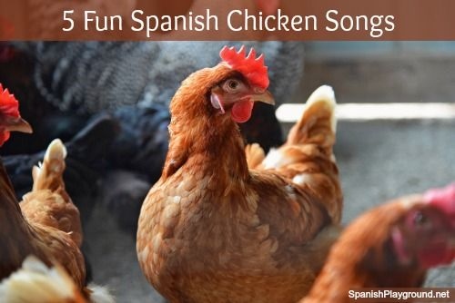 Spanish songs for kids: 5 chicken songs with fun Spanish videos for kids on Spanish Playground. #Spanishkidssongs #songsinspanish http://spanishplayground.net/spanish-chicken-song-favorites/
