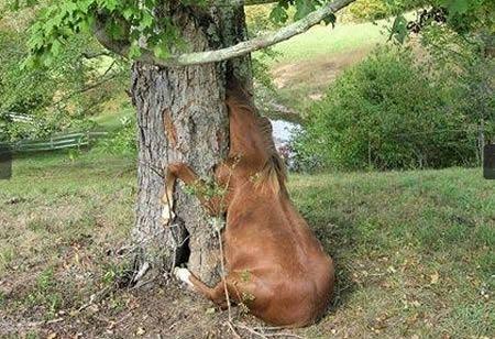 12 Bizarre Stories of Animals Getting Stuck (stuck animals) - ODDEE