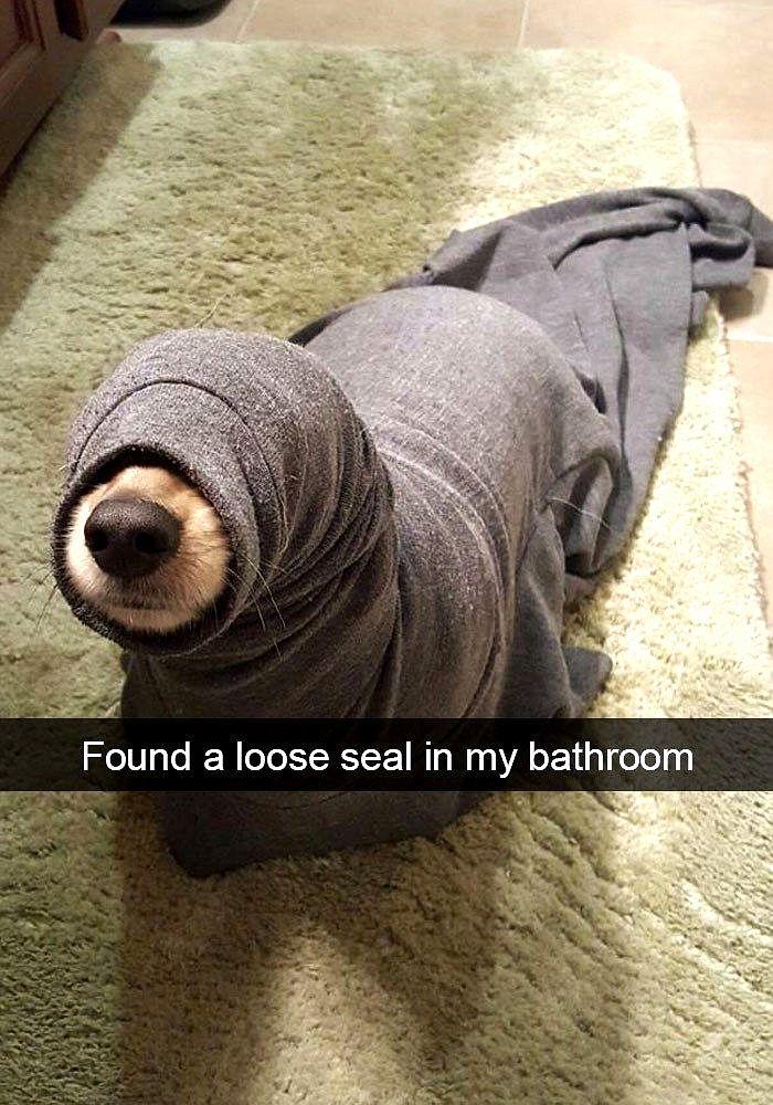 Bahahahaha Dog Memes So Funny Dog Meme Nose in 2020