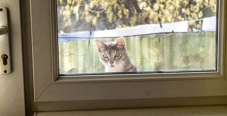 Neighbour's Cat Under The Impression You Owe Him Food – Waterford Whispers News