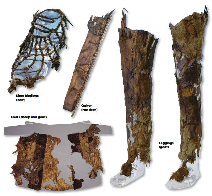 Ötzi's Sartorial Splendor. The analysis indicates that the coat (sheep and goat), loincloth (sheep), leggings (goat), and shoe bindings (cow) were made from domesticated animals, which were readily available through husbandry or trade. The fur hat (brown bear) and quiver (roe deer) were fabricated from the skins of wild species, and may have been acquired through hunting or scavenging.