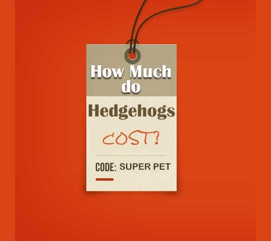 So in the last post, I answered a very common question, 'Where to Buy a Hedgehog?'. Today, I'll answer a much more important question to many and that is How much do hedgehogs cost? Before buying a pet, it's important to know whether you can afford to have a new member in your family. Hedgehog's needs of food and water,