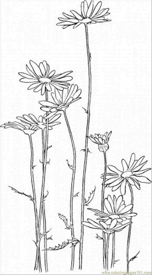 Daisy 5 Coloring Page - Free Flowers Coloring Pages | Coloring