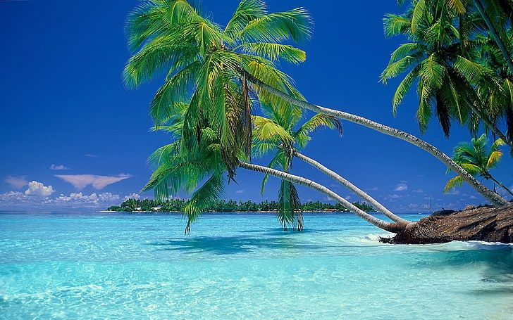 Green Coconut Palm Tree Nature Landscape Beach Tropical Sea Hd Wallpaper Maldive Sfondi Sfondi Iphone