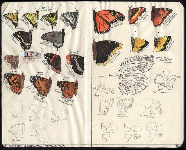 butterfly field guide (moleskine) - retro traveler