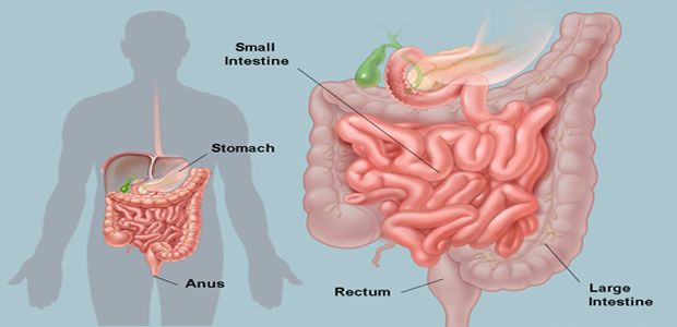 Did You Know That We Have About 30 Pounds Of Poison In Our Intestines - Here Is How To Purify It!