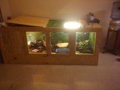 savannah monitor enclosure!