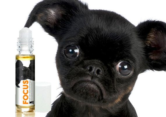 BRUSSELS GRIFFON FOCUS Dog Aromatherapy Roll-On & Spray For Canine Concentration Helps Your Dog Pay Attention Custom Blend…