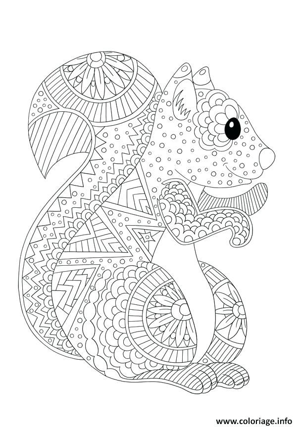 Coloriage Ecureuil Adulte Animaux Antistress Dessin Anti Stress