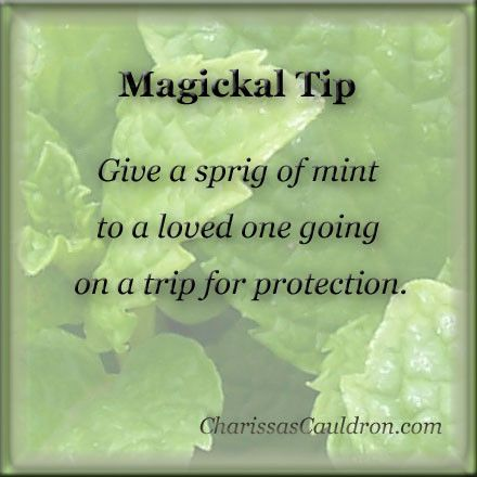 Magickal Tip - Mint for Safe Travel – Charissa's Cauldron