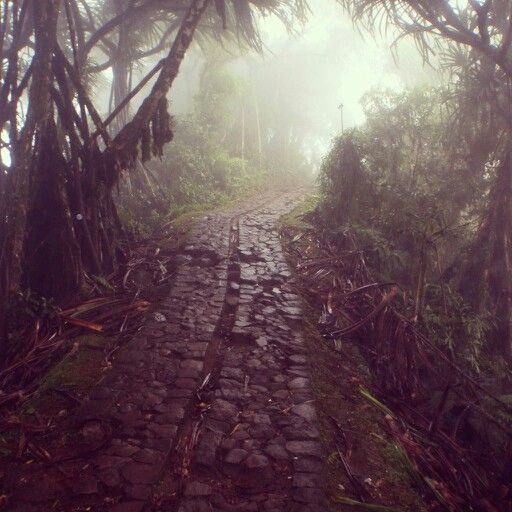 Road of the jungle
