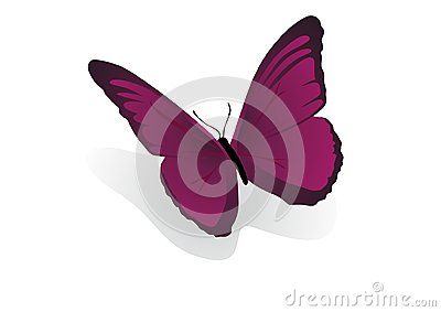 Vector Illustration of pink butterfly.