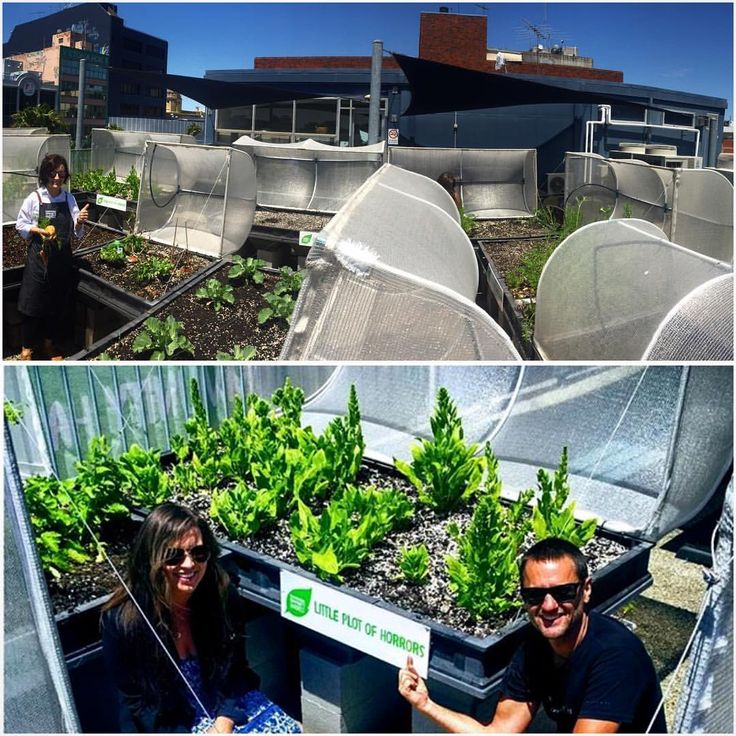 "184 Likes, 8 Comments - Vegepod (@vegepod) on Instagram: ""This GMHBA is such a good mob. Imagine if every company rooftop did this. It's not bloody hard. I…"""