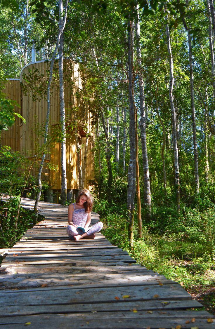 Nidales de Reussland en Parque #Reussland, Cordillera de Nahuelbuta Chile by #Susana Herrera & #Factoria