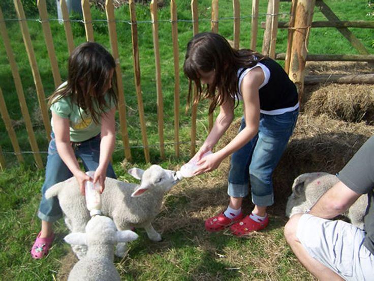 gli animali della fattoria per una vacanza con i bambini al Family Hotel Primavera Trentino