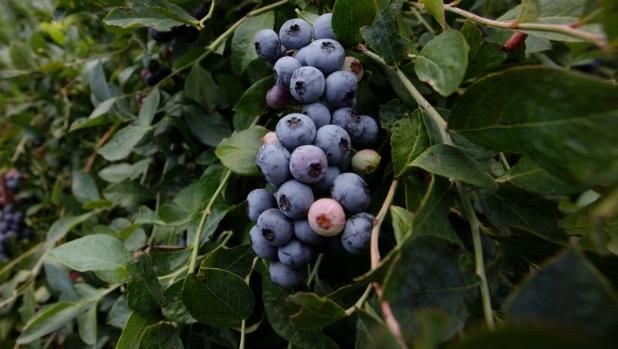 Want great tax-free returns on your investment? Plant fruit trees.