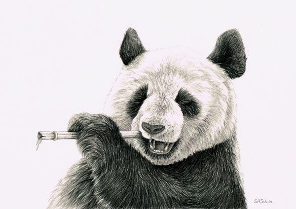 Panda Pencil Drawing Art Pinterest Drawings