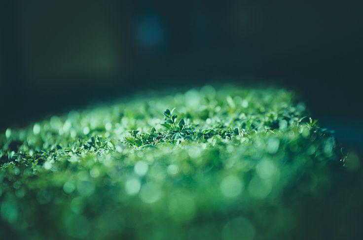 Leaves shine green by Viktoria Ilyash on 500px