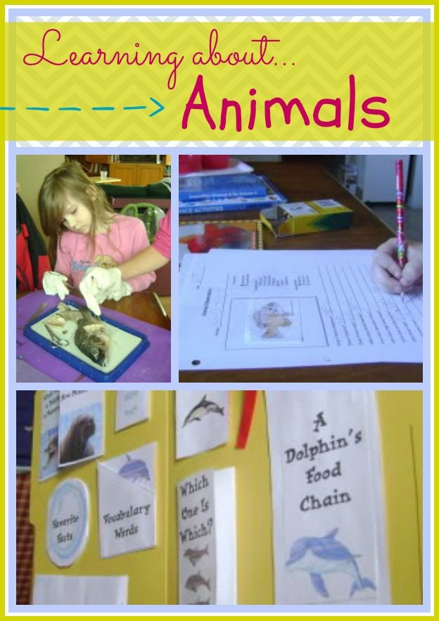 how to study kids science au