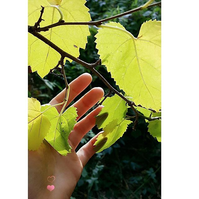 【geolynn_leiya】さんのInstagramをピンしています。 《💓i wish you a lovely autumn day🐥 🍃 🍂 🍃 🍂 #permakultur#permaculture#пермакультура#パーマカルチャー#garten#garden#сад #庭 #ガーデン#wald#森林#ecolife#エコ#landlife#landleben#countrylife#田舎暮ら#spaceoflove#familienlandsitz#родовоепоместье#kinsdomain#ringingcedarsofrussia#звенящиекедрыроссии#dieklingendenzedernrusslands#アナスタシアジャパン#アナスタシア#シベリア杉#gartenliebe》
