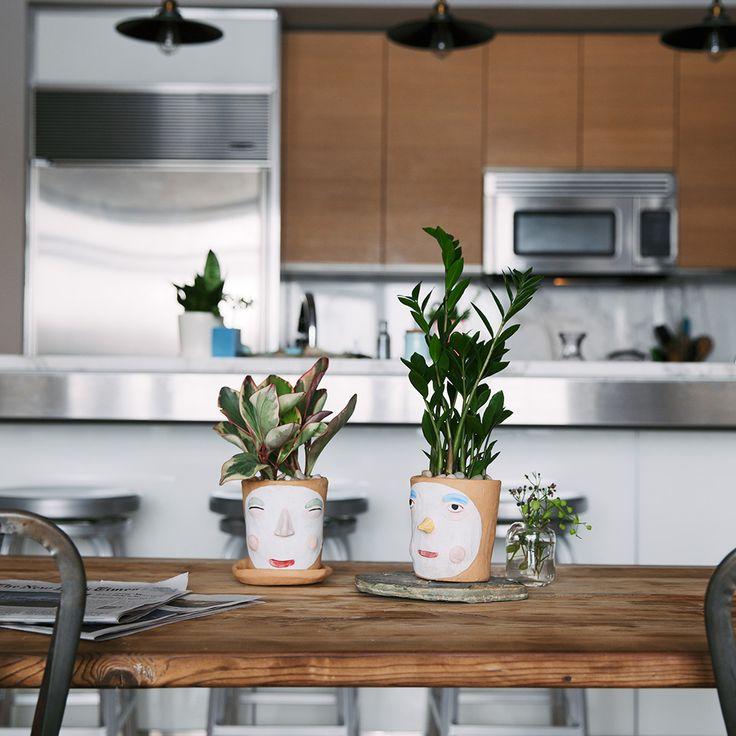 83 best  Kitchen Plants  images on Pinterest   House ...