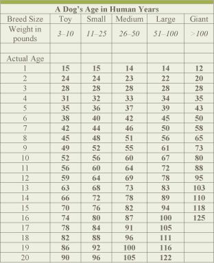 dog age chart - That makes Owen 72 human years old. Sounds about right