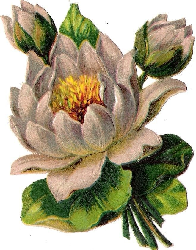 Oblaten Glanzbild scrap die cut chromo Blume flower  12cm  Seerose