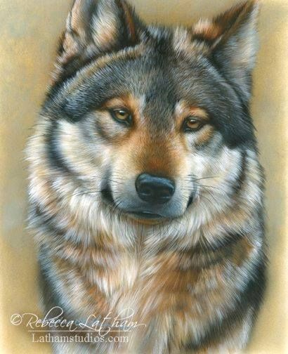 Dog Pencil Colors Drawing - Rebecca Latham                                                                                                                                                     More