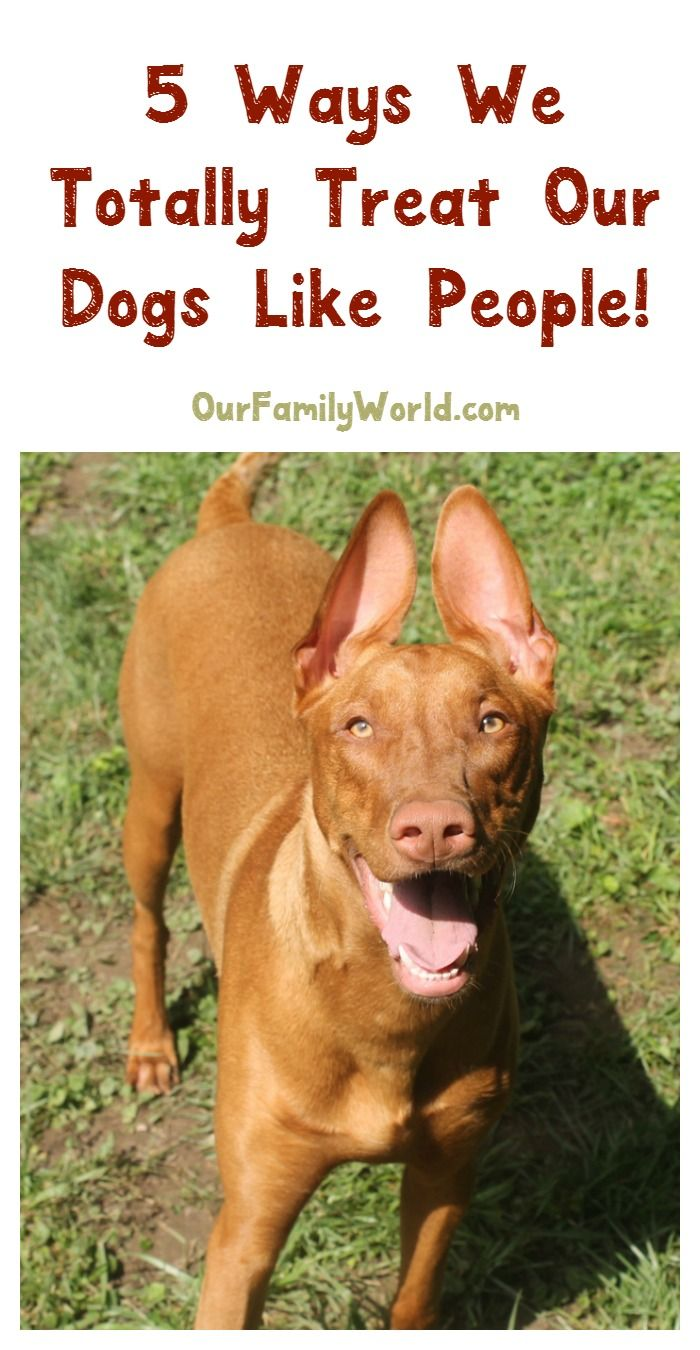 We admit it, we totally treat our dogs like people! Check out 5 ways we do it, plus learn how Tender & True Dog Food treats your dog like people, too! (#AD) #TenderandTrue