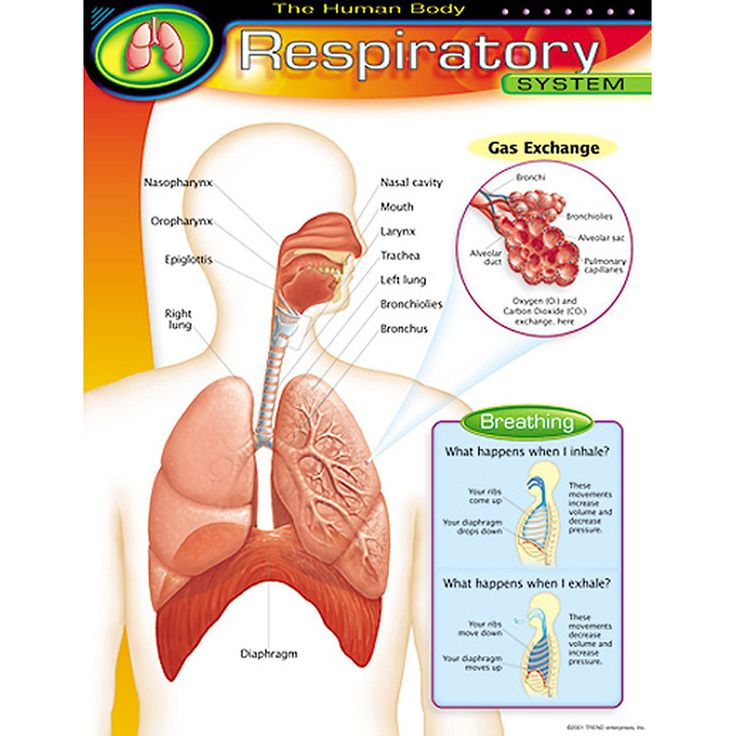 Respiratory Therapy major world reviews
