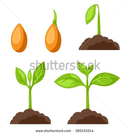 stock-vector-set-of-illustrations-with-phases-plant-growth-image-for-banners-web-sites-designs-385151014.jpg (450×470)