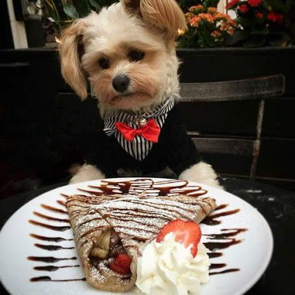 Även hundar måste klä upp sig vid fest!