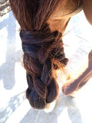 Keep your horse's tail mud free with a mud knot!   http://www.proequinegrooms.com/index.php/tips/manes-and-tails/mud-knots-for-your-horse-s-tail/