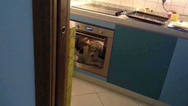 Il cane al forno che aspetta sia pronto l arrosto
